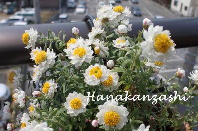 hanakanzashi