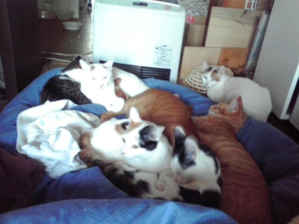 猫団子大盛り