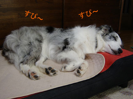 ラクスはベッドで快眠中zzz