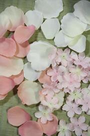 春の花びら