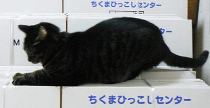 dannbo-ru.jpg