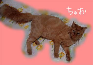 moyougawakari.jpg