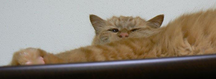 mumumu_20090628115623.jpg