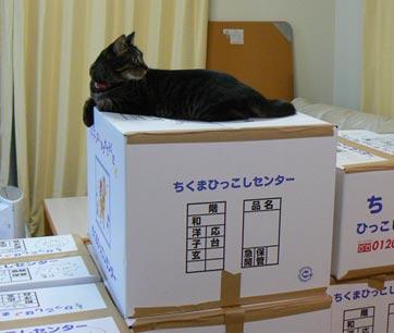 oyamano.jpg
