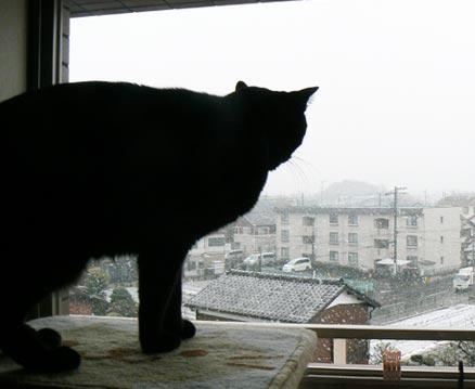 yukidesu.jpg