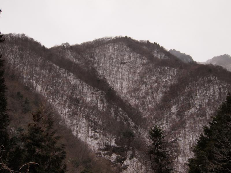 両神山リベンジ 41