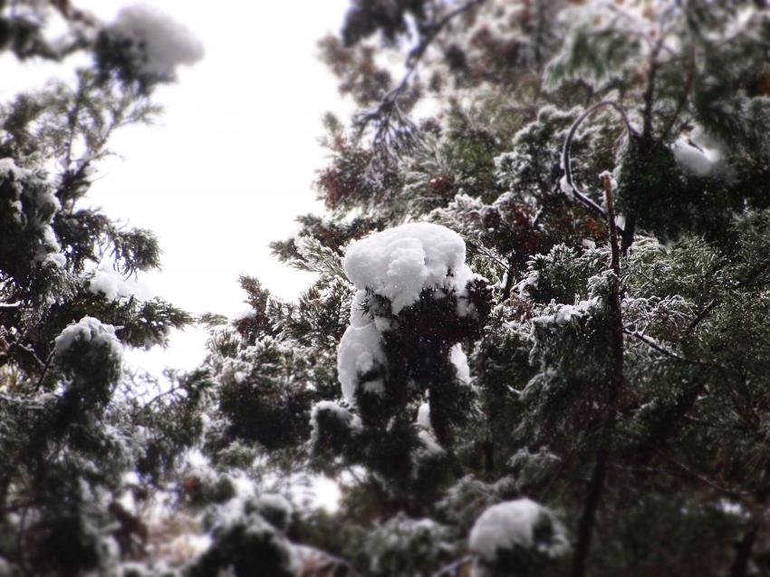 2012  3月11日 埼玉 武甲山 3