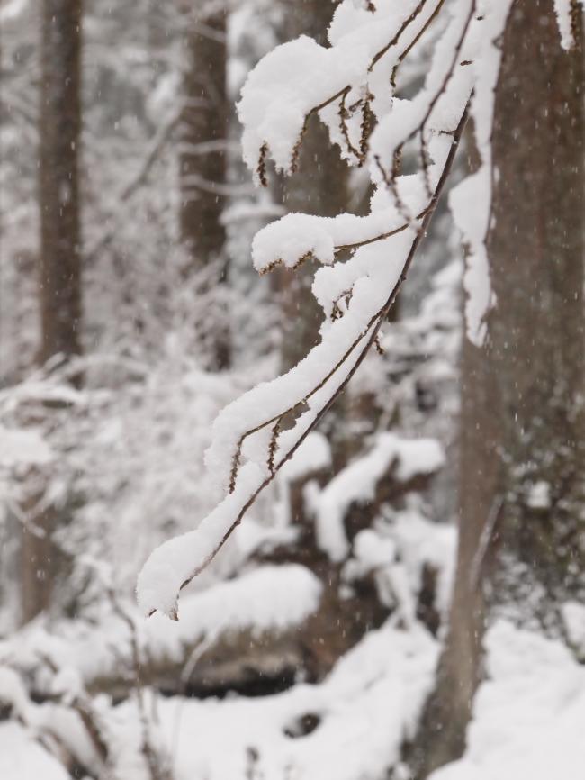 2012  3月11日 埼玉 武甲山 8