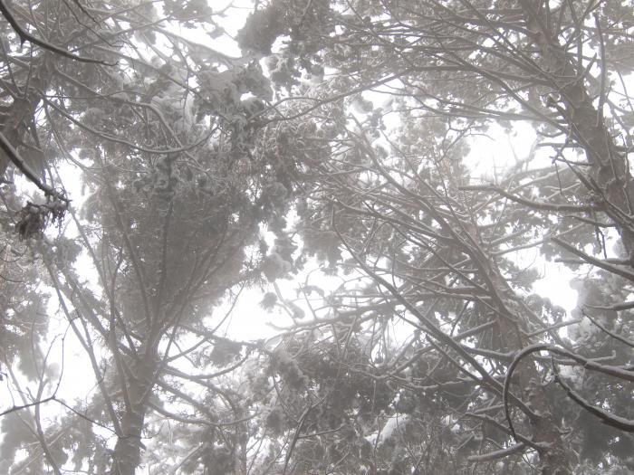 2012  3月11日 埼玉 武甲山 12
