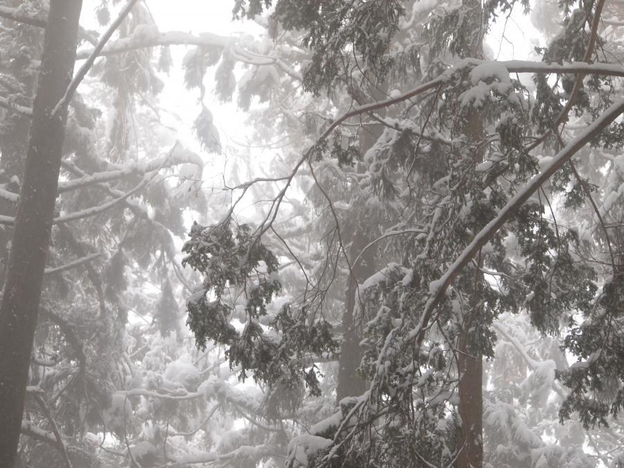 2012  3月11日 埼玉 武甲山 13