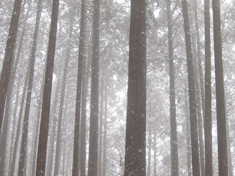 2012  3月11日 埼玉 武甲山 17