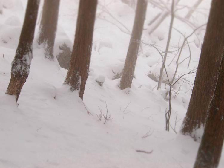 2012  3月11日 埼玉 武甲山 22