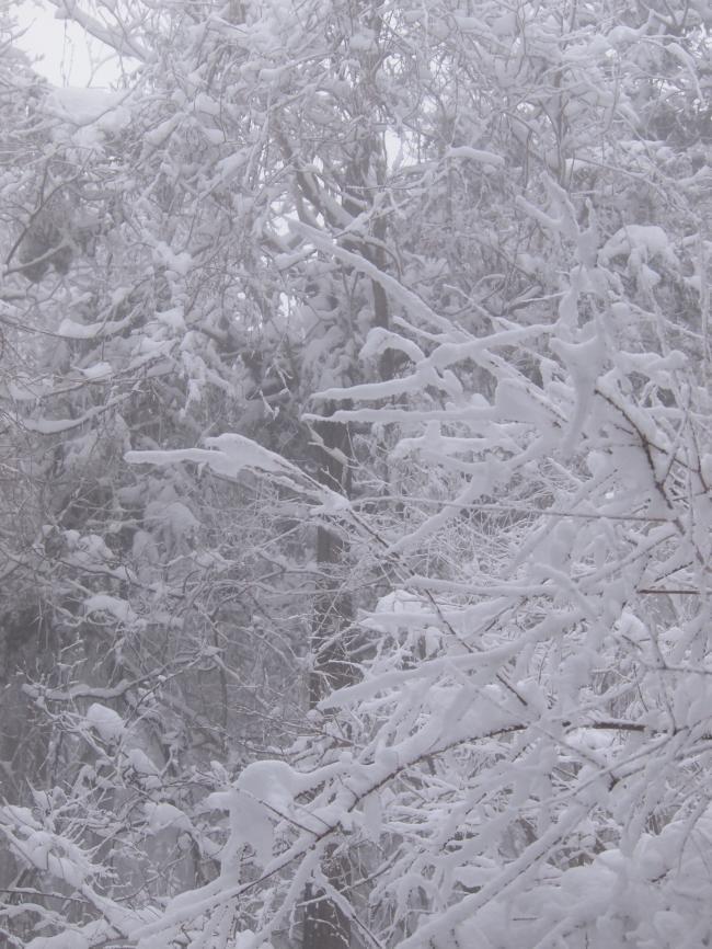 2012  3月11日 埼玉 武甲山 25