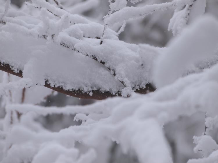 2012  3月11日 埼玉 武甲山 26