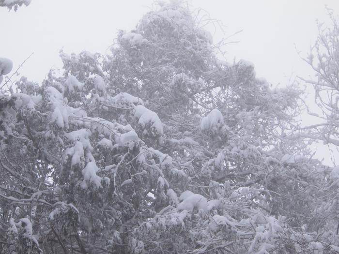 2012  3月11日 埼玉 武甲山 28