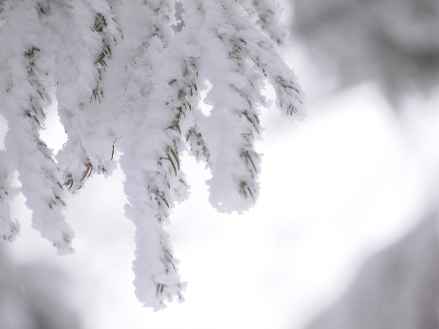 2012  3月11日 埼玉 武甲山 31