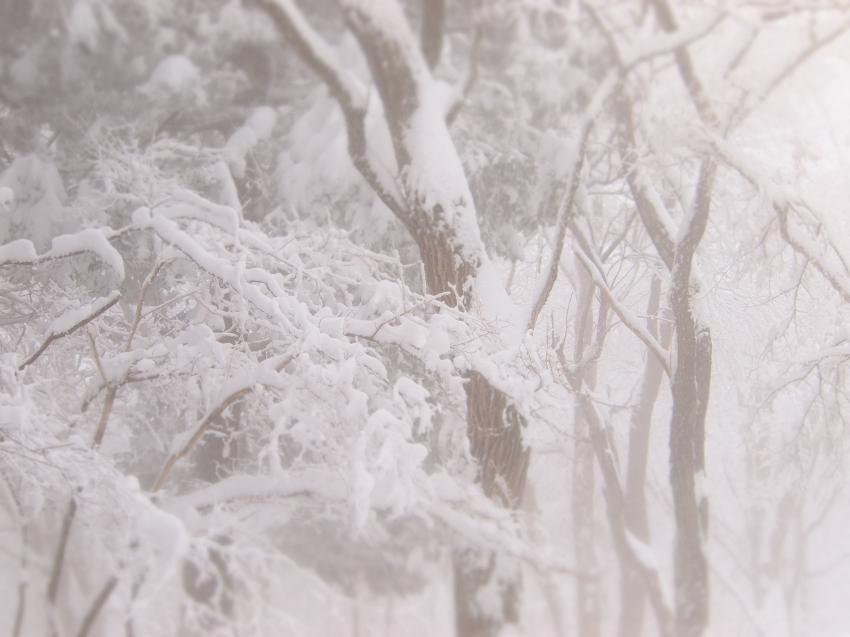 2012  3月11日 埼玉 武甲山 33