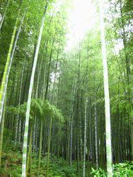arashi2.jpg