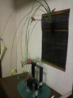 2011.09.30花 (2)