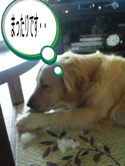 DSC_0164+(1)_convert_20110718212348.jpg