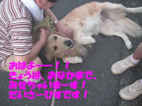 PICT0307_convert_20110730132446.jpg