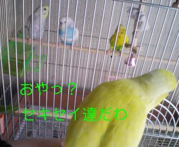 080730_094803_ed_ed.jpg