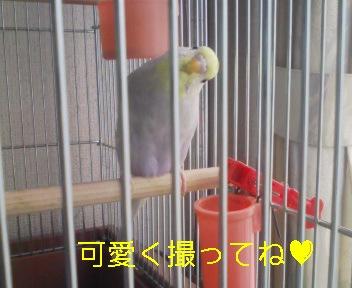 080730_160131_ed.jpg