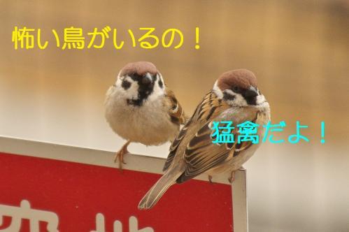 010_20120328213339.jpg