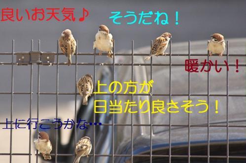 010_20120329214447.jpg