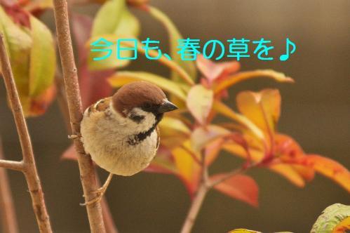 010_20120331193551.jpg