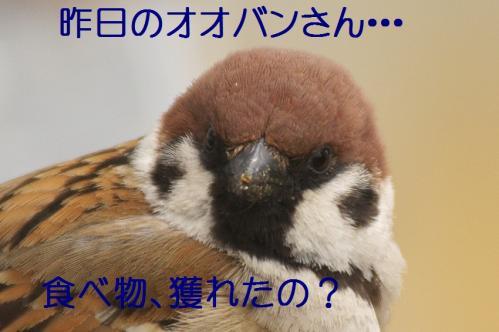 010_20120402223540.jpg