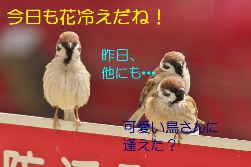 010_20120408223937.jpg