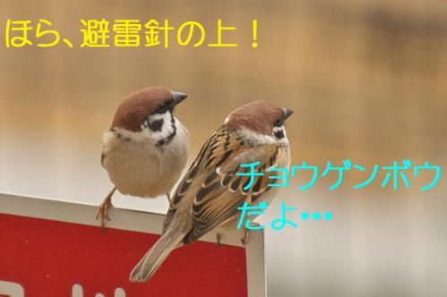 020_20120328213339.jpg