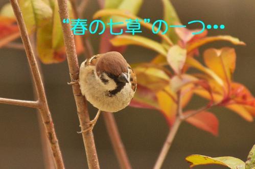 020_20120331193550.jpg
