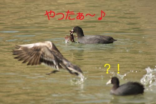 020_20120402223539.jpg