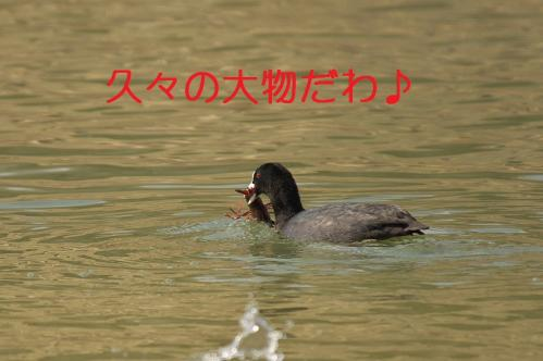 025_20120402223539.jpg