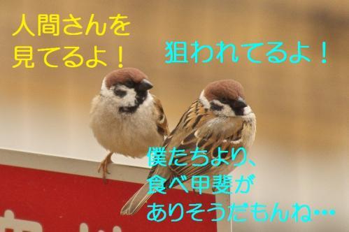 030_20120328213337.jpg