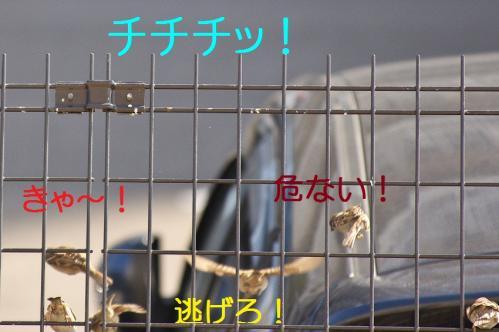 030_20120329214446.jpg