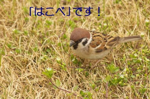 030_20120331193550.jpg