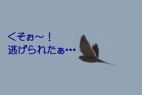040_20120329214446.jpg