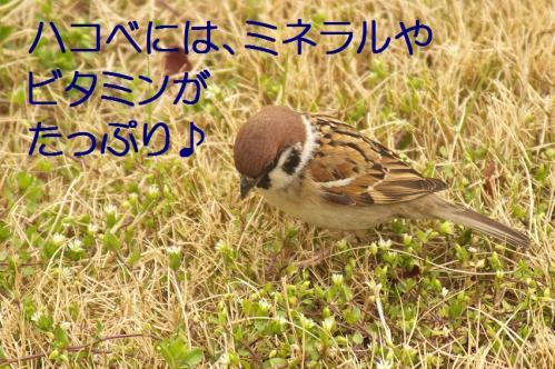 040_20120331193549.jpg