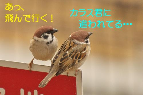 050_20120328213337.jpg