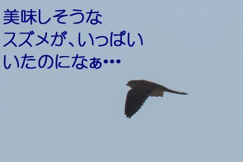 050_20120329214445.jpg