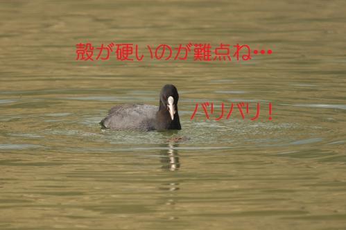 050_20120402223537.jpg