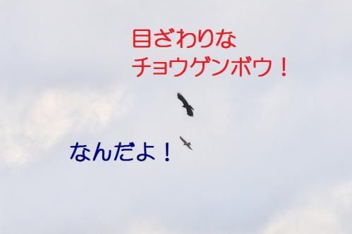 060_20120328213336.jpg