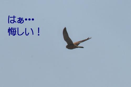 060_20120329214445.jpg