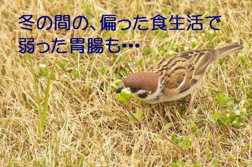 060_20120331193548.jpg