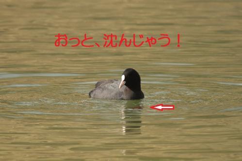 060_20120402223637.jpg