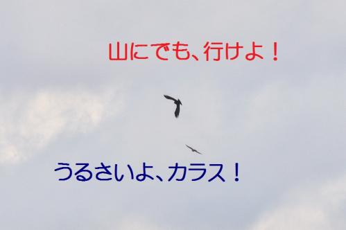 070_20120328213541.jpg