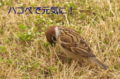 070_20120331193649.jpg